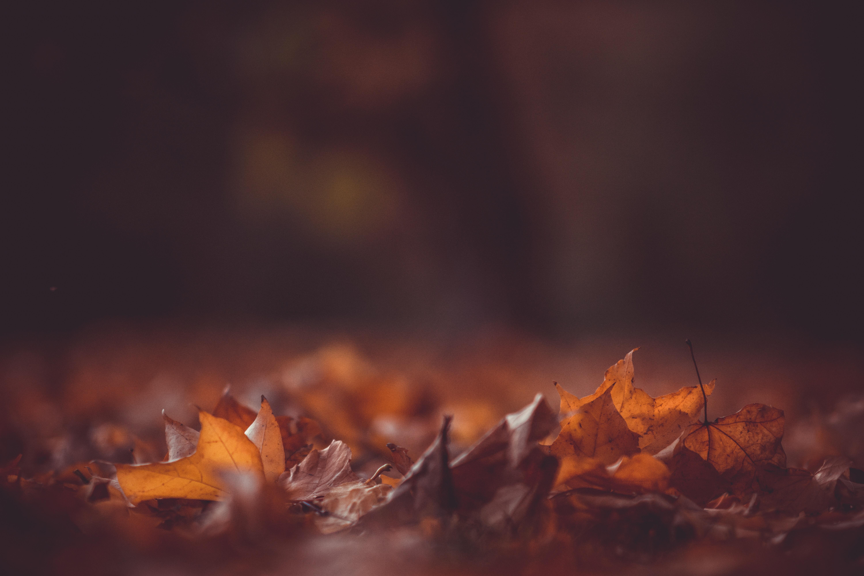 Есенни равносметки